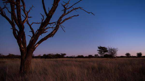 A scenic static sunset / day to night timelapse transition of a dead Acacia Tree with the Milky Way twisting through a dark landscape scene and the moon rises to light up the landscape with focus pull Royalty-free stock video