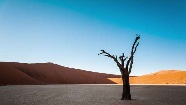 Static timelapse of a landscape scene in Deadvlei, Namibia with a solidified tree in a white clay pan as the sun rises over the red sand dunes Royalty-free stock video