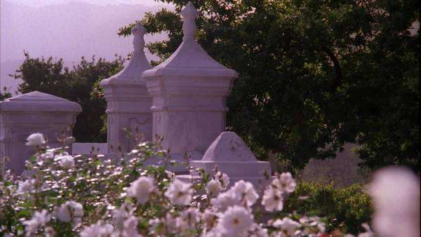 Tracking shot of a garden of white roses and the entrance to the Vrede en Lust wine estate Rights-managed stock video