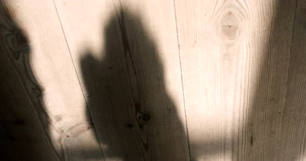 Hand-held shot of shadow of a dog on wooden planks Royalty-free stock video