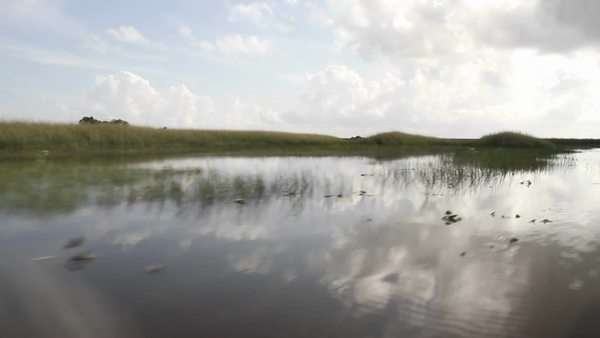 POV from an airboa driving through the Florida Everglades. Royalty-free stock video