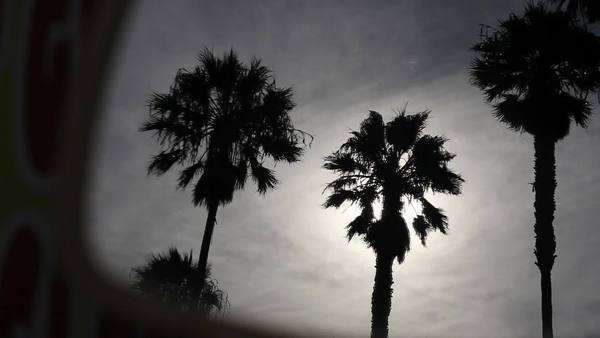 Handheld shot of tall palm trees against heavy sky Royalty-free stock video