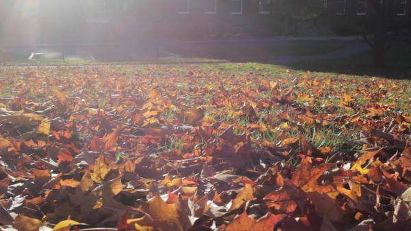 Handheld shot showing bright sunlight and autumn leaves Royalty-free stock video