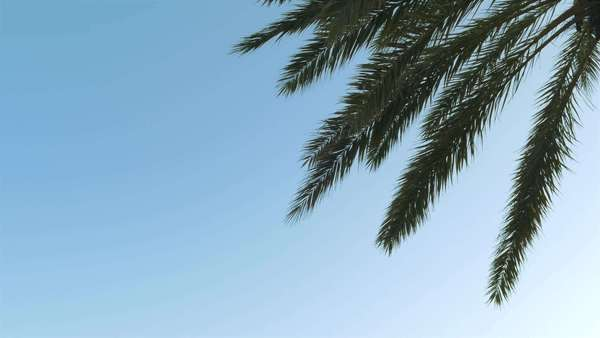 Palm tree against the sky, side Royalty-free stock video
