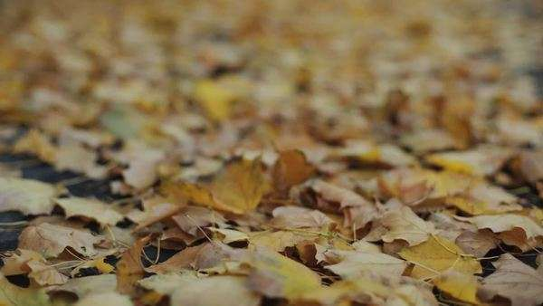 Rack focus of leaves on the ground Royalty-free stock video
