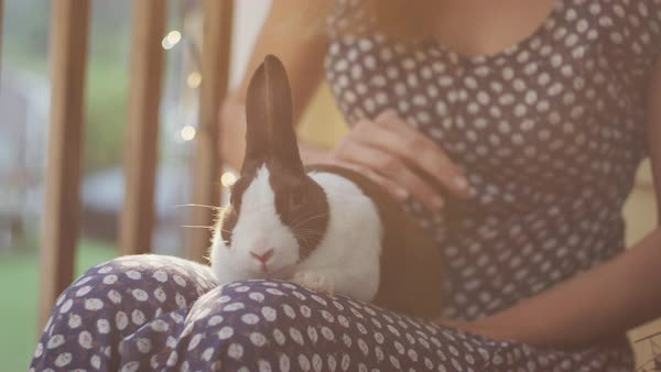 A woman petting a rabbit lying on her lap Royalty-free stock video