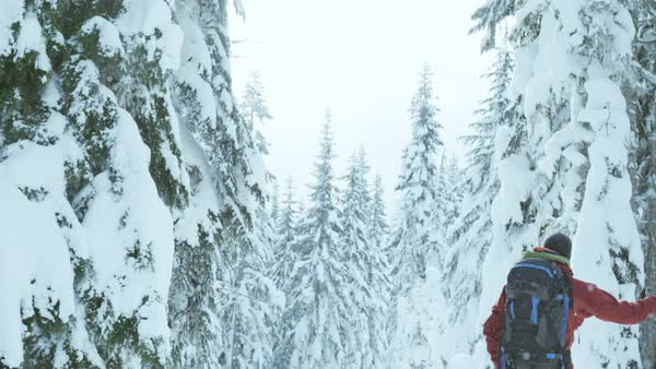 Camera tilt of a skier looking at snow covered pine trees in snowfall Royalty-free stock video