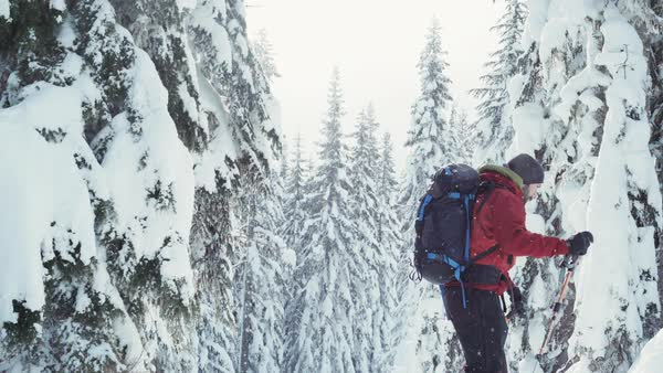 Tilt-up shot of a man ski mountaineering in a snow covered pine forest Royalty-free stock video