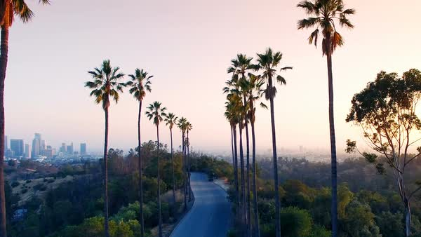 Aerial drone between palm trees in Los Angeles Royalty-free stock video