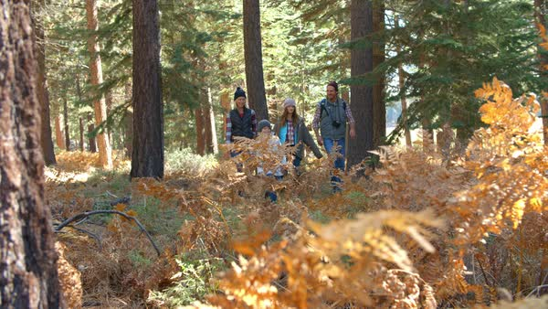 Handheld shot through foliage of family walking in forest Royalty-free stock video