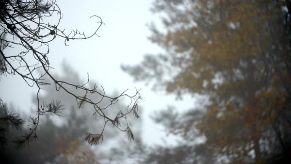 Autumn woodland on a misty morning Royalty-free stock video