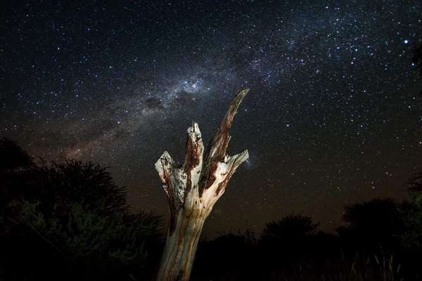 Arc shot capturing a dry tree trunk and the night sky displaying numerous stars Rights-managed stock video