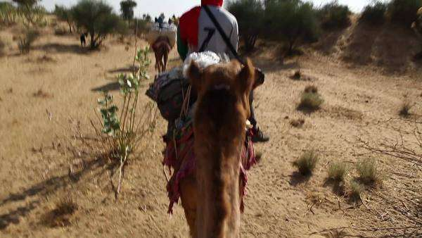 Medium shot of a traveling camel caravan Royalty-free stock video