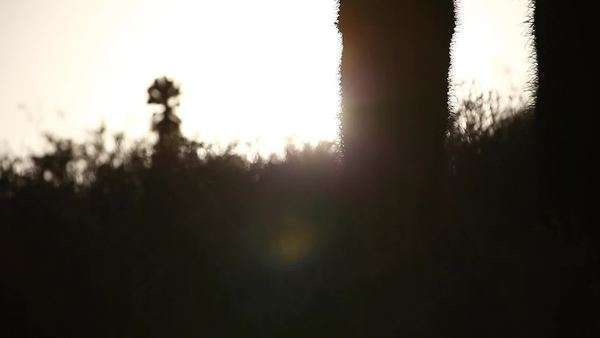Medium shot of cactus silhouette Royalty-free stock video