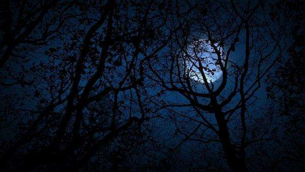 Moving through scary woods looking up at full moon Royalty-free stock video