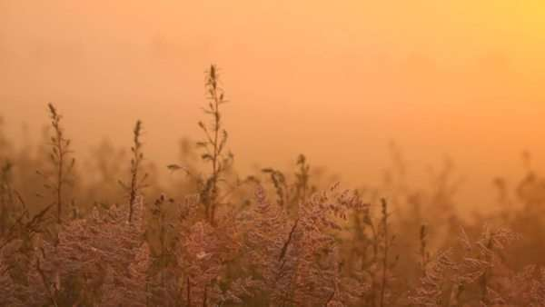 The meadow with big grass in the mist in the morning, sunrise, panning Royalty-free stock video