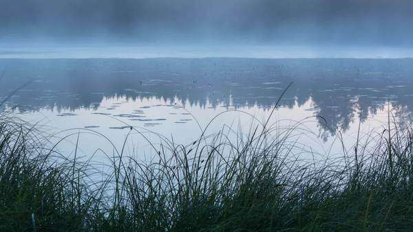 Timelapse of fog moving on a lake with shore sedge at early morning Royalty-free stock video