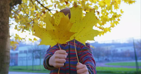 Little boy hiding behind the yellow autumn leaves Royalty-free stock video