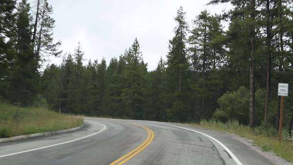 Handheld shot and point of view shot while driving on a sinuous road with pine trees on each side Royalty-free stock video