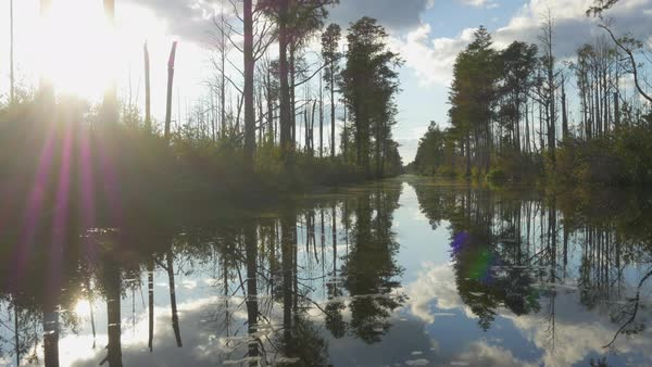 Amazing wetlands swamp canal with tall mossy trees in beautiful summer evening. Gorgeous reflection in calm glassy water surface Royalty-free stock video