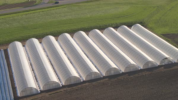 AERIAL: Flying above beautiful plastic greenhouses and vegetables planted in rows with veggie garden cover crops on sunny spring day Royalty-free stock video