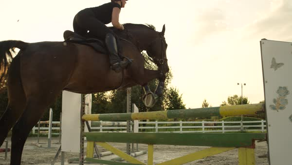 SLOW MOTION, CLOSE UP: Young horsegirl horseback riding strong brown horse jumping the fence in sunny outdoors sandy parkour dressage arena. Competitive rider training jumping over obstacles at sunset Royalty-free stock video