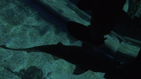 Small Shark Swimming Under The Glass Floor In Oceanarium Royalty Free Stock Video