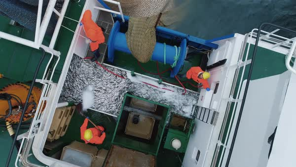 Flying over a commercial fishing ship where people processing the fish. Top down view. Royalty-free stock video