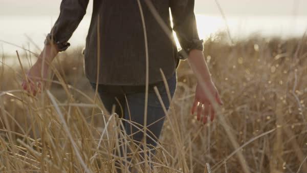 tall grass field sunset. Slow Motion Medium Shot Of Woman Walking Through Field Tall Grass At Sunset Royalty-