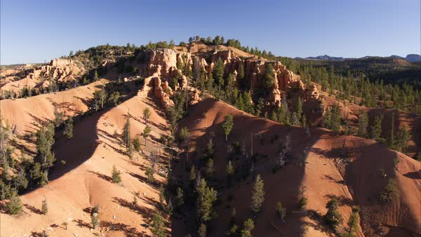 Wide high angle flyover shot of pine trees in canyon landscape Royalty-free stock video
