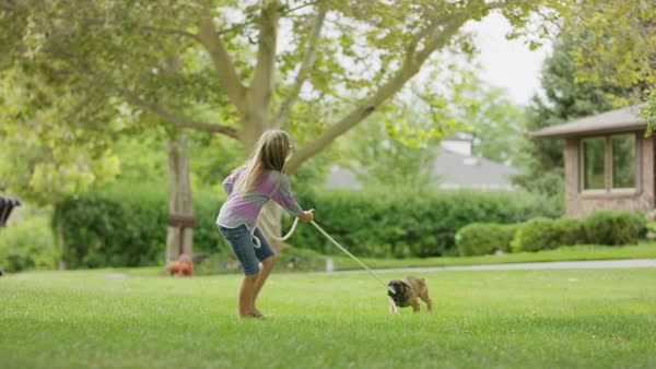 Girl playing tug-of-war with puppy in grass / Provo, Utah, United States Royalty-free stock video