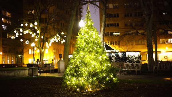 Wide shot of a christmas tree in Rittenhouse Park, Philadelphia, PA, USA Royalty-free stock video