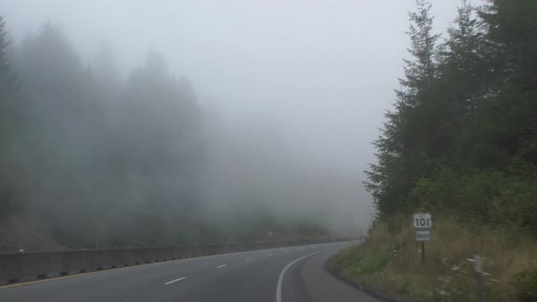 Wide shot of redwoods along a foggy road Rights-managed stock video