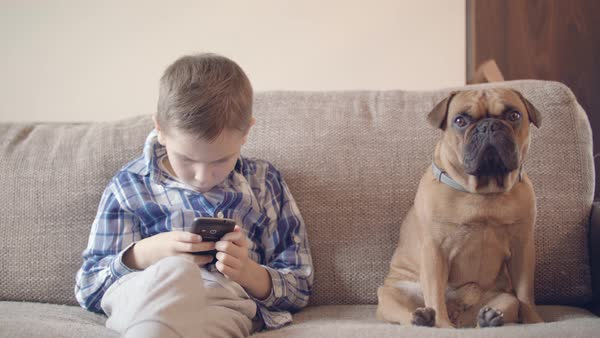 Boy playing with phone next to small bulldog on couch medium wide shot Royalty-free stock video