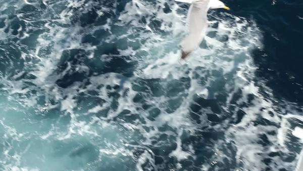 Seagulls flying above the sea Royalty-free stock video