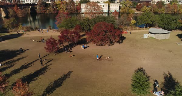 A high angle aerial establishing shot of pet owners playing with their dogs at the Auditorium Shores Dog Park on the banks of the Colorado River in downtown Austin, Texas.   Royalty-free stock video