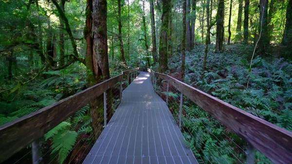 Stabilized POV shot of walking through a rainforest walkway Royalty-free stock video