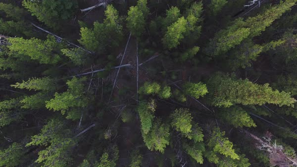 Oregon forest pan aerial Rights-managed stock video