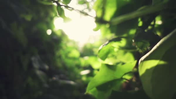 Close-up macro plants and nature slow motion Rights-managed stock video