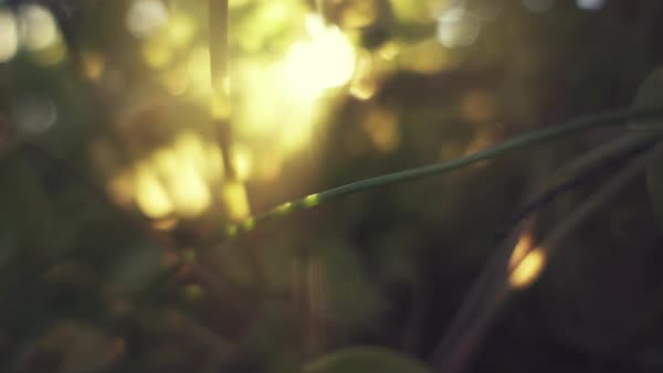 Close-up macro plants and nature slow motion sunset Rights-managed stock video