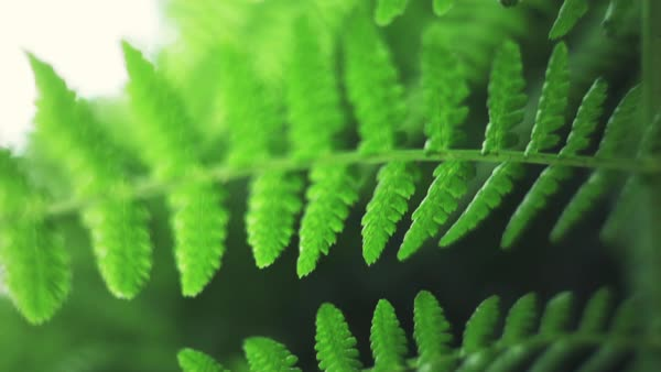 Rainforest fern slow motion macro Rights-managed stock video