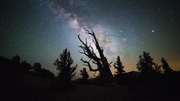 Bristlecone Pine Forest Milky Way Stars Timelapse Tracked Rights-managed stock video