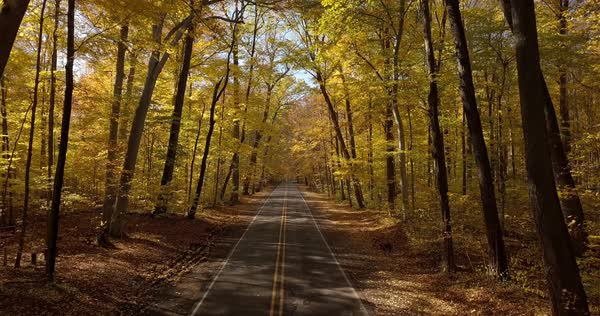 View of an empty road in forest during autumn Royalty-free stock video
