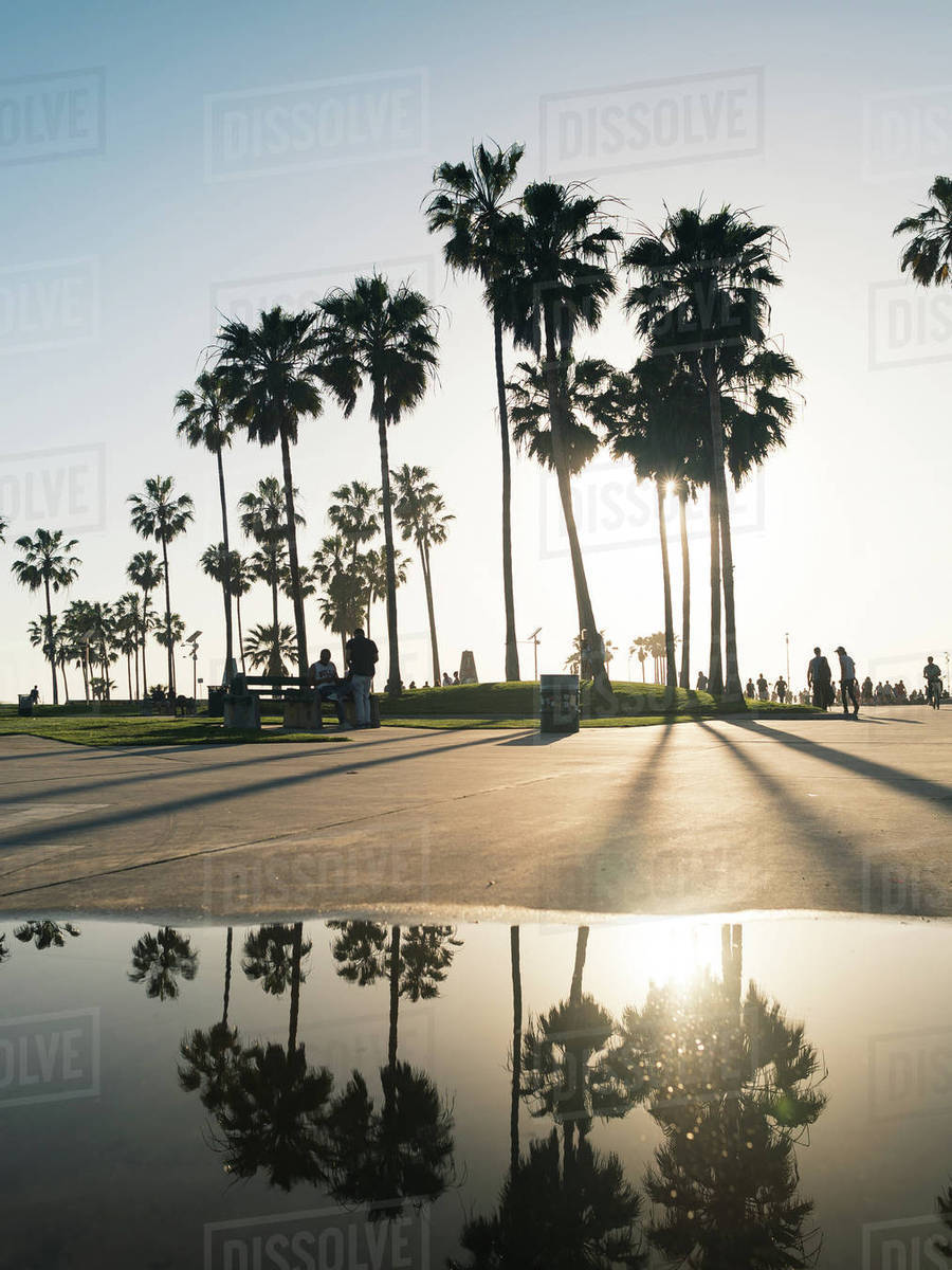Palm trees with reflection Royalty-free stock photo