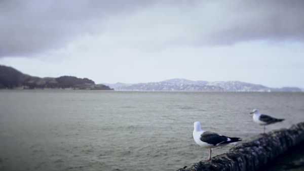 Seagulls standing on a pier and then flying off toward the ocean. Royalty-free stock video