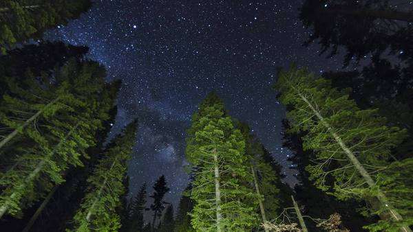 Yosemite National Park: The Milky Way over beautiful lit trees, timelapse Royalty-free stock video