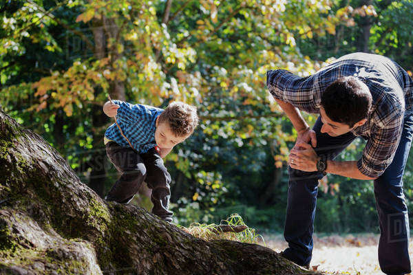 Father and son looking at an insect on large oak tree in rainforest; Langley, British Columbia, Canada Royalty-free stock photo