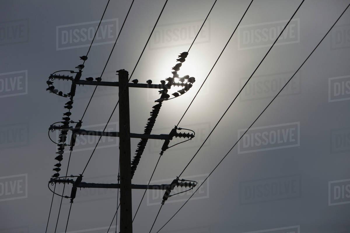 Birds on hydro wires; Brampton, Ontario, Canada - Stock Photo - Dissolve