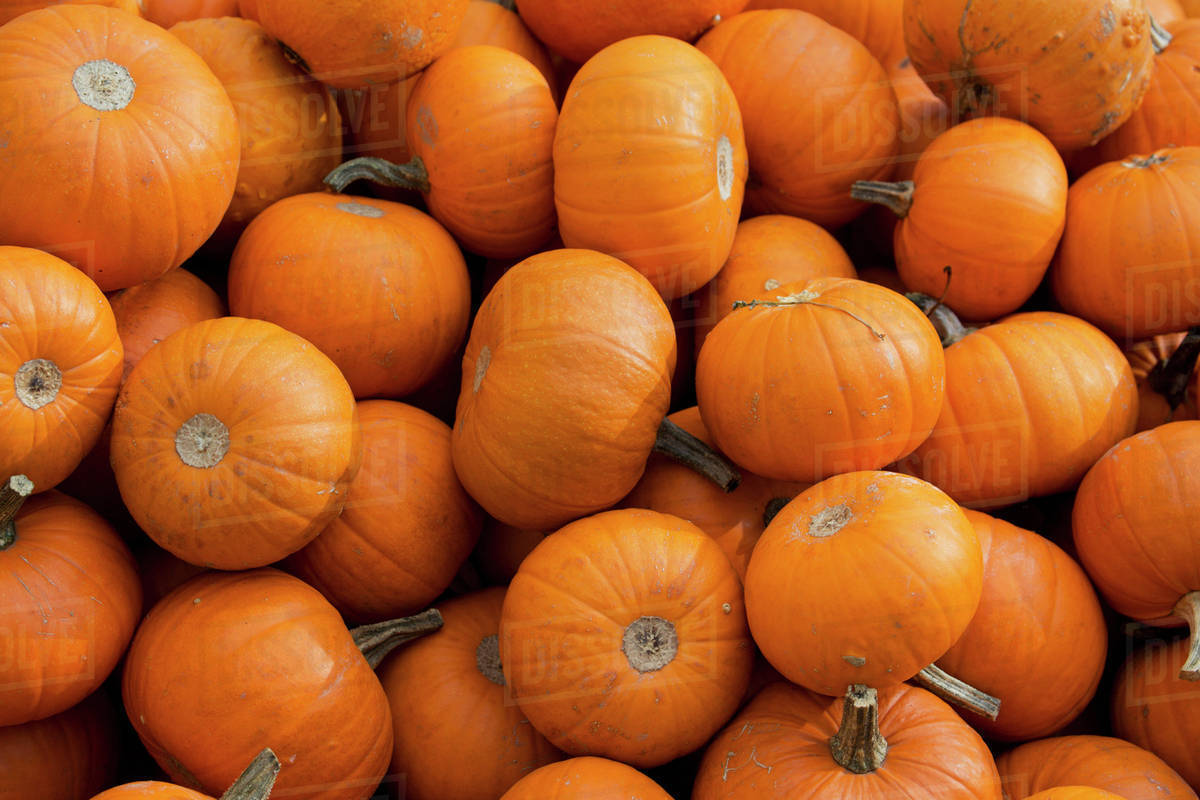close up of a pile of small pumpkins brixlegg austria stock