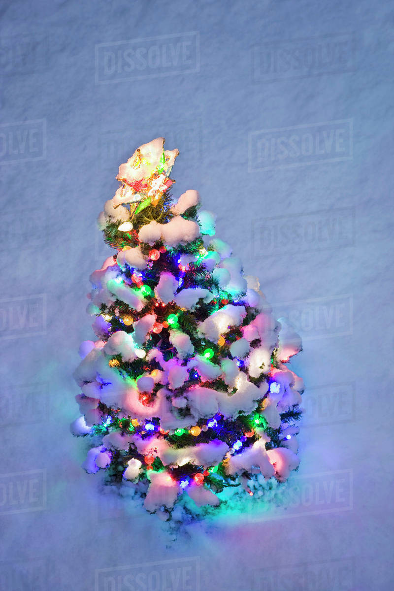 overhead view of a small lit christmas tree at twilight in winter - Small Lit Christmas Tree